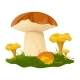 Mushrooms Hand Drawn Colorful Illustration - GraphicRiver Item for Sale