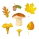 Autumn Forest Collection with Leaves and Mushrooms - GraphicRiver Item for Sale