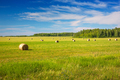Round Bales of Hay on a Field After the Harvest - PhotoDune Item for Sale