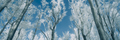 Winter forest panorama with frozen trees - PhotoDune Item for Sale