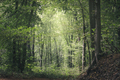 Green forest background - PhotoDune Item for Sale