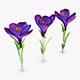 Flower Crocus Violet v 1 - 3DOcean Item for Sale