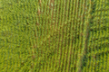 Aerial view of wheat Crop - PhotoDune Item for Sale