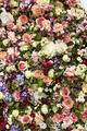 Flower Wall - PhotoDune Item for Sale