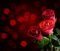 Valentine roses - PhotoDune Item for Sale