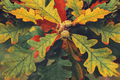 Oak leaves with acorns. Background image of leaves. - PhotoDune Item for Sale