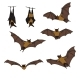 Vector Set of Cartoon Flying Foxes. - GraphicRiver Item for Sale