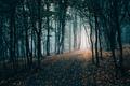 Dark autumn forest path - PhotoDune Item for Sale
