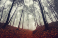 Enchanted autumn forest with red leaves - PhotoDune Item for Sale