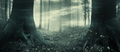 Surreal haunted Halloween forest panorama - PhotoDune Item for Sale