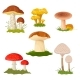 Forest Mushrooms Collection Isolated on White - GraphicRiver Item for Sale