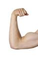 biceps isolated on white background - PhotoDune Item for Sale