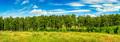 Forest belt line - PhotoDune Item for Sale