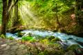 River Tara in the park - PhotoDune Item for Sale