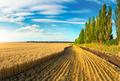 Wheat field landscape - PhotoDune Item for Sale