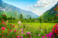 National park Montenegro - PhotoDune Item for Sale