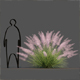 Pink Flamingo Muhly Grass - 3DOcean Item for Sale