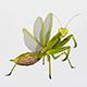 Common mantis - 3DOcean Item for Sale