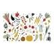 Fresh Vegetables Set - GraphicRiver Item for Sale