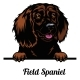 Head Field Spaniel - Dog Breed. Color Image of a - GraphicRiver Item for Sale