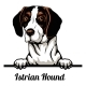 Head Istrian Hound - Dog Breed. Color Image of a - GraphicRiver Item for Sale