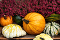Colorful pumpkins for halloween decoration. - PhotoDune Item for Sale