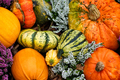 Pretty colorful pumpkins for halloween party decoration. - PhotoDune Item for Sale