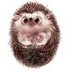 Cute Little Watercolor Cartoon Hedgehog - GraphicRiver Item for Sale