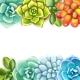 Floral Border. Succulents Arranged Un a Shape of - GraphicRiver Item for Sale