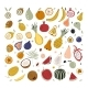 Hand Drawn Tropical and Exotic Fruits Isolated on - GraphicRiver Item for Sale