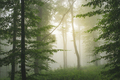 Magical misty forest - PhotoDune Item for Sale