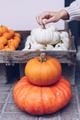 Woman chooses pumpkins at a store - PhotoDune Item for Sale