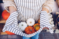 Woman holding in her apron many pumpkins, top view. - PhotoDune Item for Sale