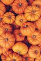 Many orange pumpkins. Halloween concept. - PhotoDune Item for Sale