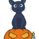 Halloween Cat on Pumpkin - GraphicRiver Item for Sale