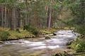 Eresma River, Scot Pine Forest, Guadarrama National Park, Spain - PhotoDune Item for Sale