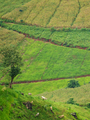 Rural scene countryside at Chiang mai Thailand - PhotoDune Item for Sale
