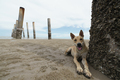 domestic dog relaxing on sand beach - PhotoDune Item for Sale