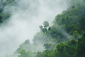 tropical forest with fog and mist - PhotoDune Item for Sale