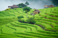 The terraced rice paddy in Bong Piang village Chiang mai Thailand - PhotoDune Item for Sale