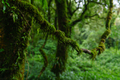 Tropical Rain Forest at Doi Inthanon National Park Chiang Mai Thailand - PhotoDune Item for Sale