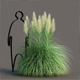 Dwarf Pampas Grass - 3DOcean Item for Sale