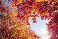 Autumn tree leaves on sunny sky background - PhotoDune Item for Sale