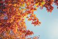 Golden autumn tree leaves - PhotoDune Item for Sale