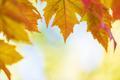 Autumn tree leaves background - PhotoDune Item for Sale