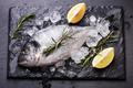 Seafood - PhotoDune Item for Sale