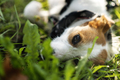 Cute stray dog - PhotoDune Item for Sale