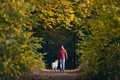 Rear view of man with dog in autumn nature - PhotoDune Item for Sale