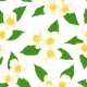 Semless Pattern Branch Flower Jasmine with Green - GraphicRiver Item for Sale