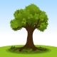 Summer Tree with Green Leaves - GraphicRiver Item for Sale
